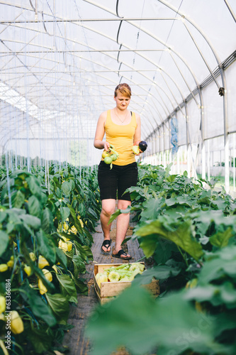 Farmer girl picking vegetables in greenhouse