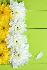 Beautiful chrysanthemum flowers on wooden table close-up