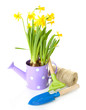 Composition with garden equipment and flowers in watering can