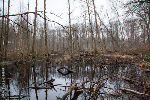 Fallen Trees in Swamp