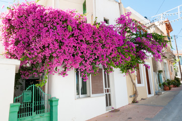 Street, houses and flowers