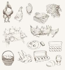 vector egg chicken breeding set