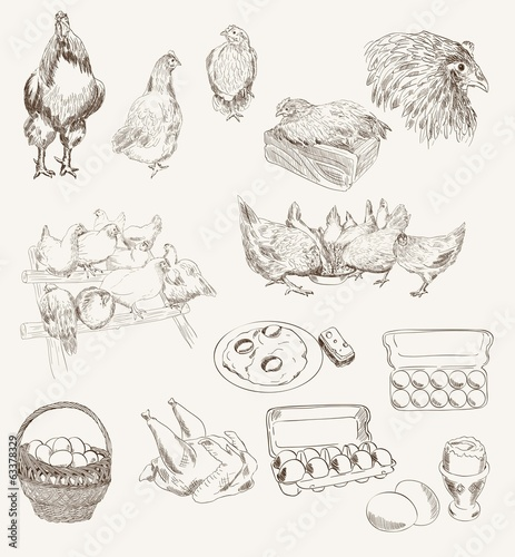 vector egg chicken breeding set