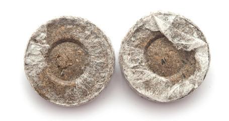 Peat tablets for seedlings