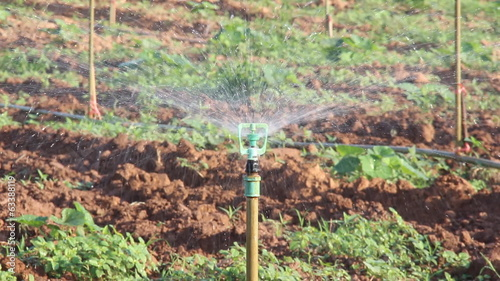 Crop irrigation by using water sprinkler system