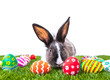 Rabbit and easter eggs in green grass isolated on white backgrou