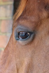 horse eye close-up detail with reflection of yard