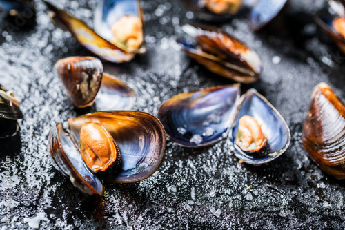 Closeup of mussels on black rock