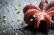 Closeup of freshly cooked purple octopus