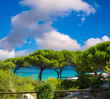 Pine Trees with ocean background, blue sky over Corsica coastlin