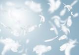 Fototapety White feathers
