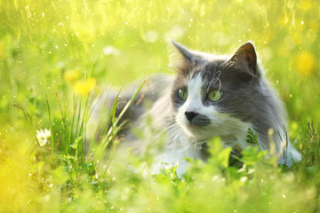 Grey cat in garden