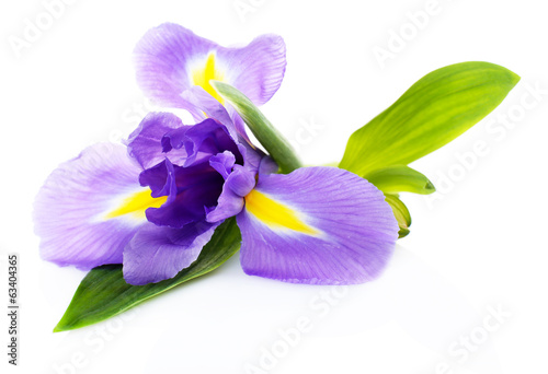 Foto op Canvas Iris Beautiful iris flower isolated on white