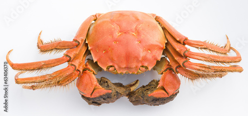 top view cooked crab with claws opened on a white background