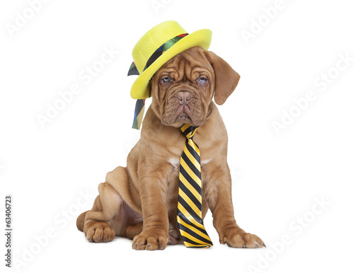 puppy with yellow necktie and hat