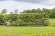 landscape with sheep near Laigh Milton, East Ayrshire, Scotland