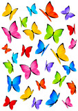 Color butterflies isolated on white
