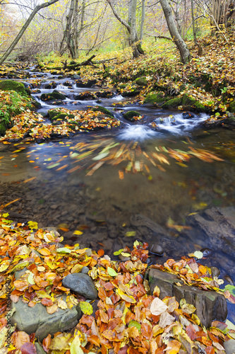 brook in autumn, Slovakia