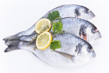 Fresh Dorado fishes