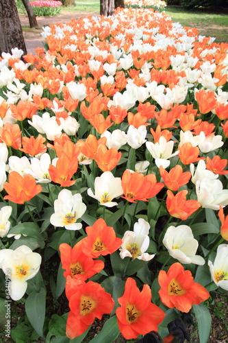 fiori esposizione colture floreali ornamentali in serre