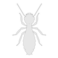 cartoon image of termite ant