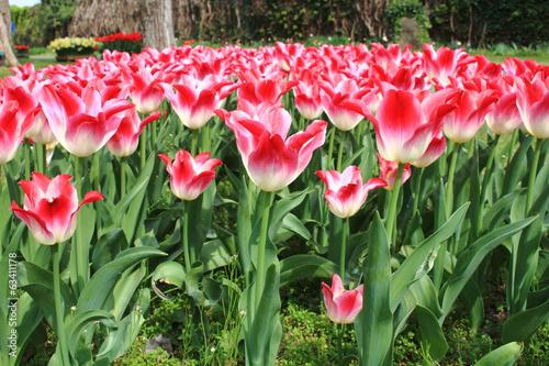 fioriture primaverili coltivazione floreali