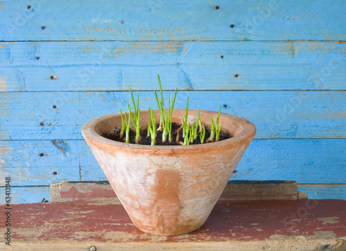 seedlings in a flower pot, gardening, spring concept