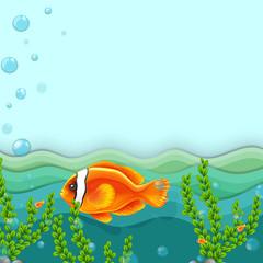 An orange fish under the sea