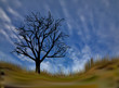 bare tree under blue sky illustration