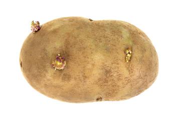 Russet Potato On White Background