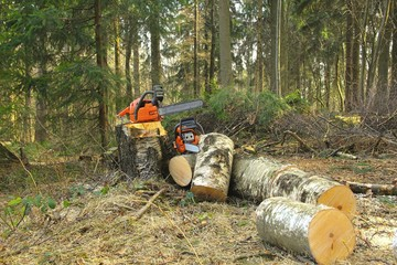 Hazard tree felling