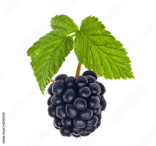 single blackberry with green leaves