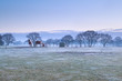 horses on frosty pasture during misty sunrise