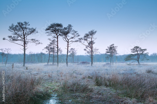 misty frosty morning on marsh