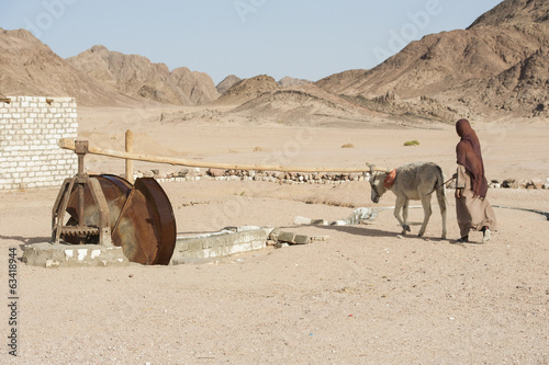 Bedouin girl with donkey working a water wheel