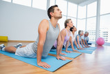Fototapety Group doing cobra pose in row at yoga class