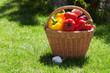 Fresh ripe vegetables in the basket