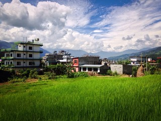 lush green rice fields in Pokhara, Nepal during the monsoon