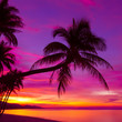 Palm tree silhouette at sunset on tropical beach