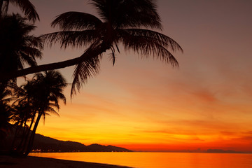Tropical sunset beach with palm tree silhouette