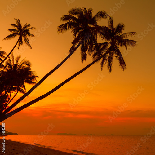 Palm trees silhouette on beach at sunset