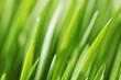 Es ist die Zeit für grüne Teppiche