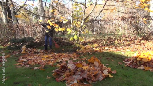 girl in yard raking leaves tulip tree dight with golden leaves