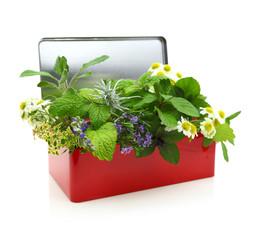 Fresh herbs in a red box