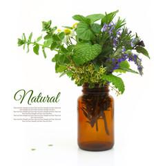 Fresh herbs in a medical bottle