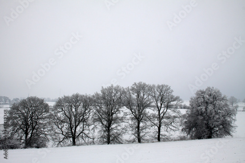 canvas print picture Baumreihe im Winter