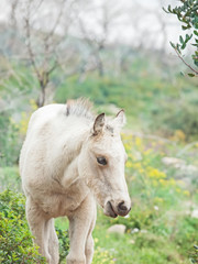 cream foal at freedom in mountain