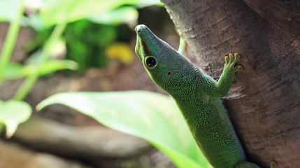 A Gecko, Looking Up