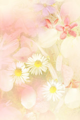 Beautiful summer flowers  artistic background