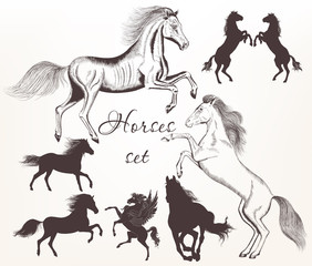 Collection  of vector detailed horses with silhouettes for desig